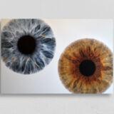 irisfotografie doppel alu-dibond direktdruck weiss